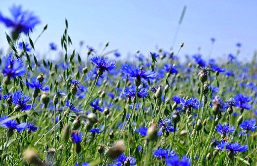 magas vérnyomás és búzavirág magas vérnyomás kezelésére szolgáló vitaminok